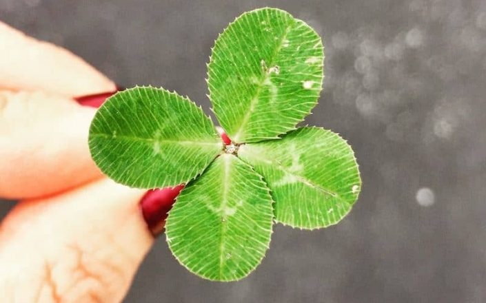 amy-reed-408611-unsplash-clover