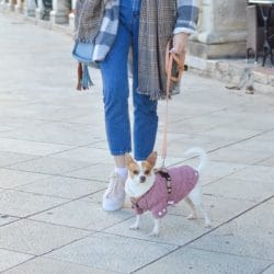 dog-walking-lady